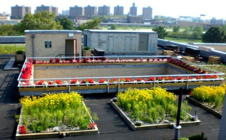 green roof demonstration project atop 5-Borough Building NYC Parks Dept.